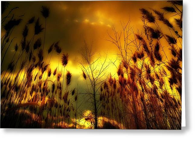 A Blaze Of Gold In Nature Greeting Card