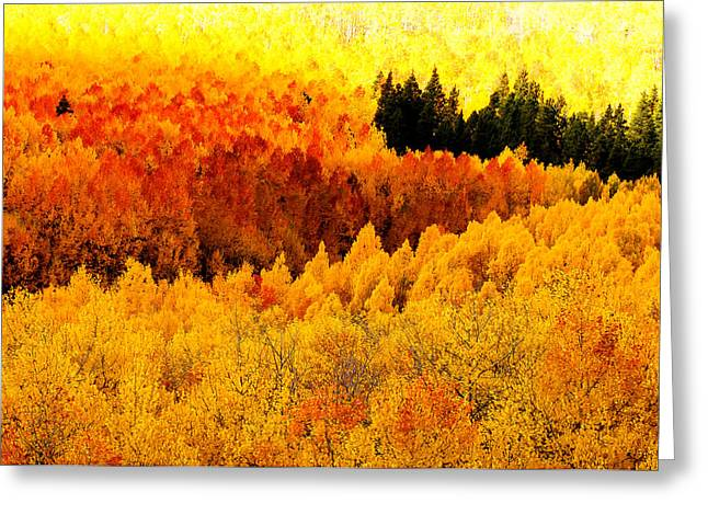 Blazing Mountainside Greeting Card by The Forests Edge Photography - Diane Sandoval