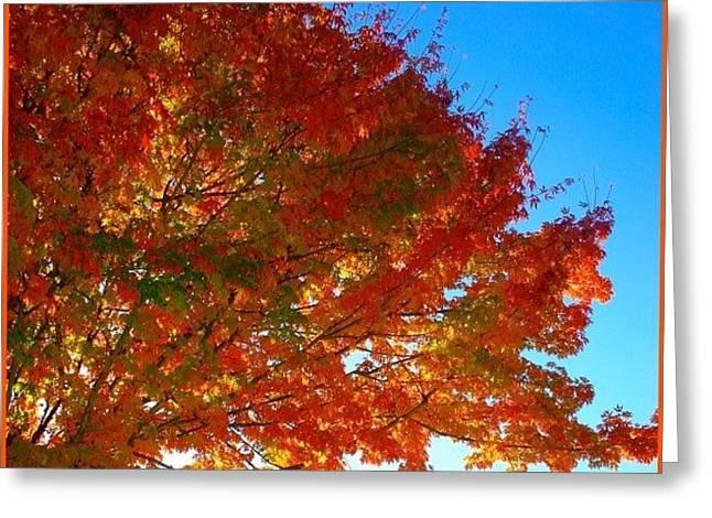 Blazing Orange Maple Tree Greeting Card