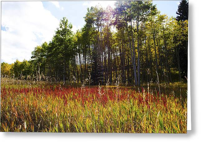 Blazing Red Grass In Colorado Greeting Card