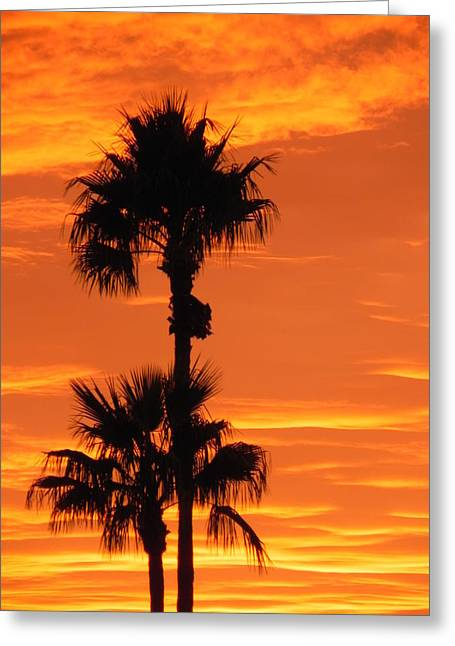 Greeting Card featuring the photograph Blazing Sunset by Deb Halloran