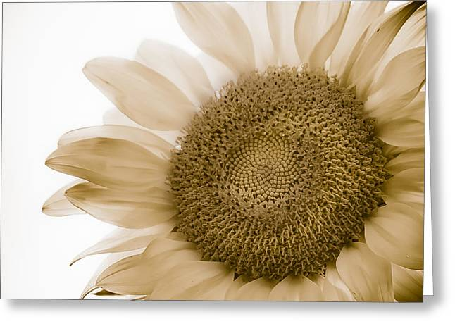 Bleached Sunflower Greeting Card