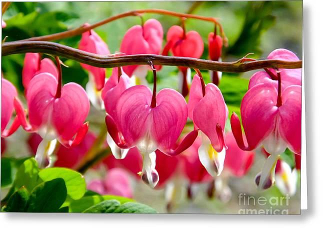 Greeting Card featuring the photograph Bleeding Heart Flowers by Kristen Fox