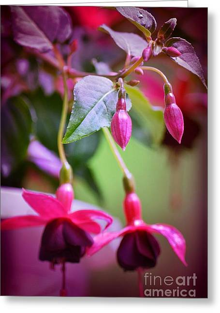 Greeting Card featuring the photograph Bleeding Hearts by Denise Tomasura