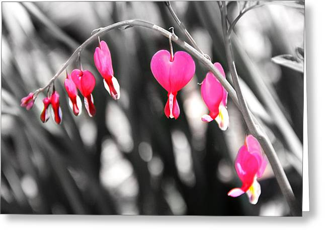 Bleeding Hearts Greeting Card by Mary Burr
