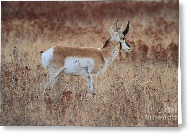Blending In Greeting Card by Adam Jewell