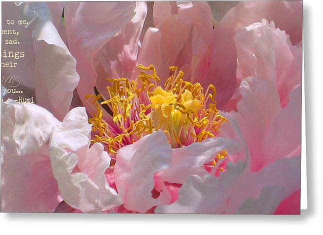 Greeting Card featuring the photograph Blessings And Blossoms  by Cindy Greenstein