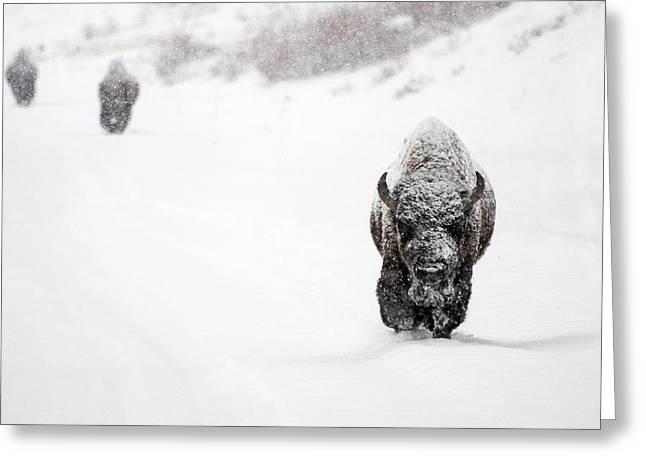 The Boys Of Winter Greeting Card by Sandy Sisti