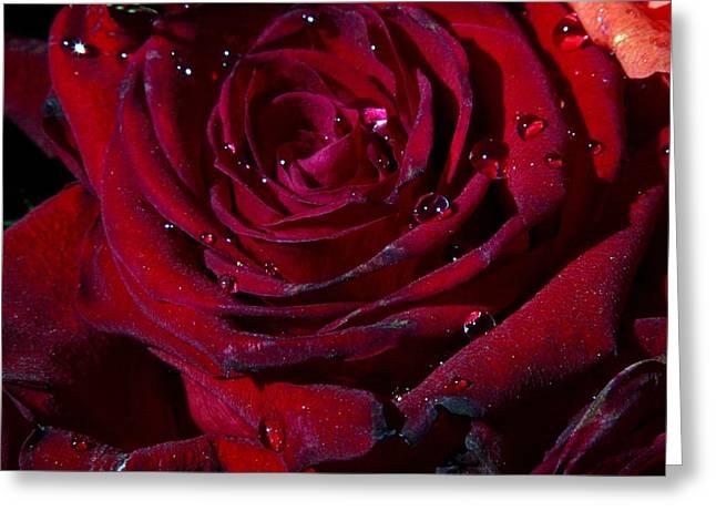 Blood Red Rose Greeting Card by Linda Unger