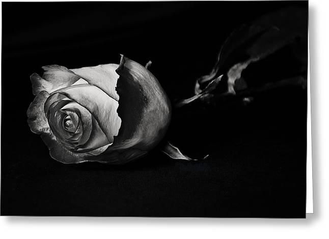 Bloodless Rose Greeting Card