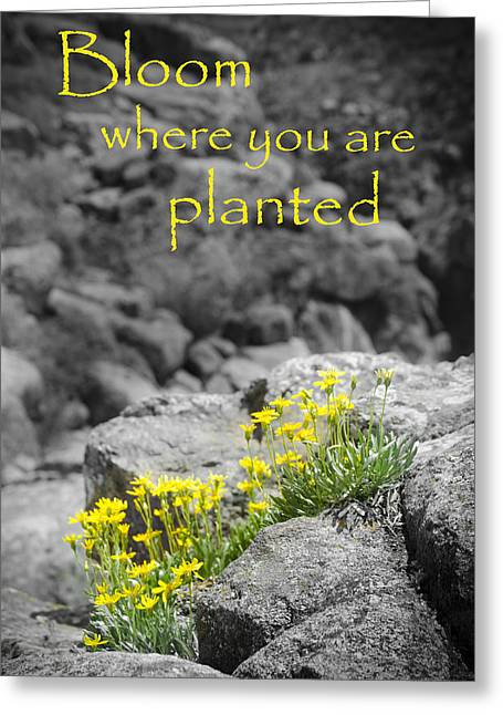 Bloom Where You Are Planted Greeting Card by Debbie Karnes