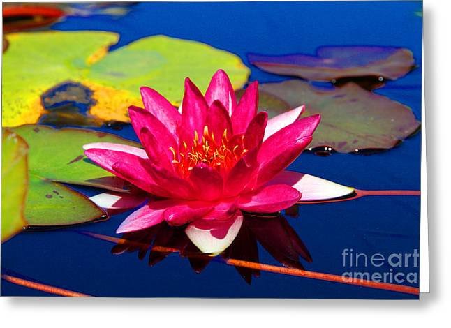 Blooming Lily Greeting Card
