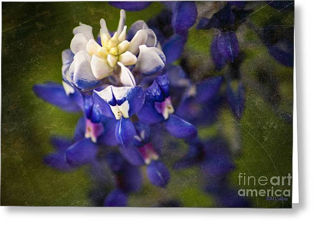 Bloomin' Bluebonnet Greeting Card by Amanda Collins
