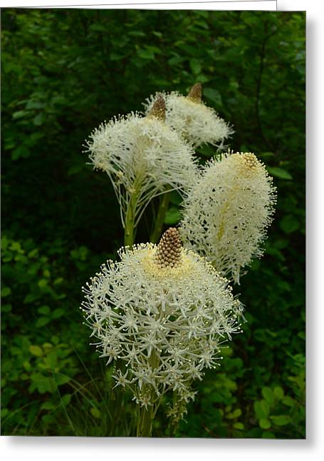 Blooming Bear Grass Greeting Card