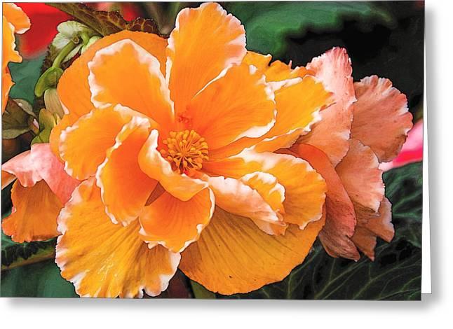 Blooming Begonia Image 1 Greeting Card