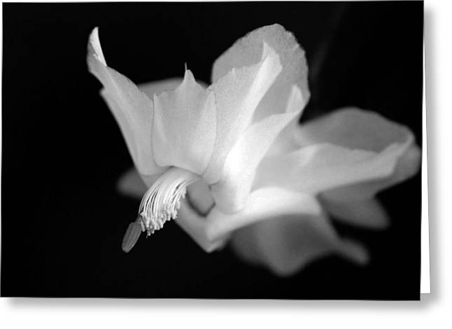 Greeting Card featuring the photograph Blooming Cactus II by Silke Brubaker