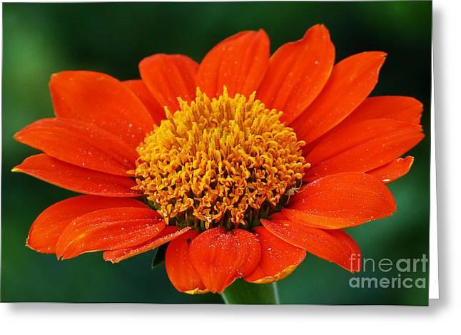 Blooming Flower Greeting Card