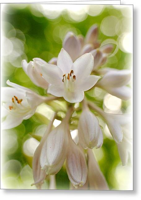 Blooming Hosta Greeting Card