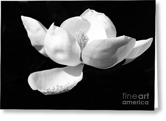 Blooming Magnolia In Black And White Greeting Card