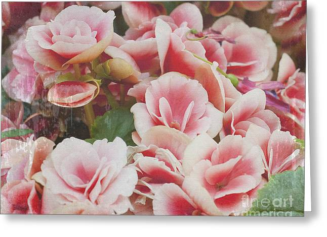Blooming Roses Greeting Card
