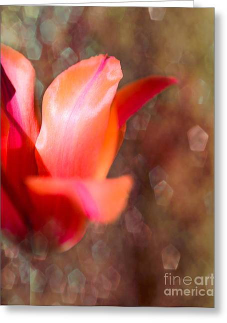 Blooming Tulip Bokeh Greeting Card by Sonja Quintero
