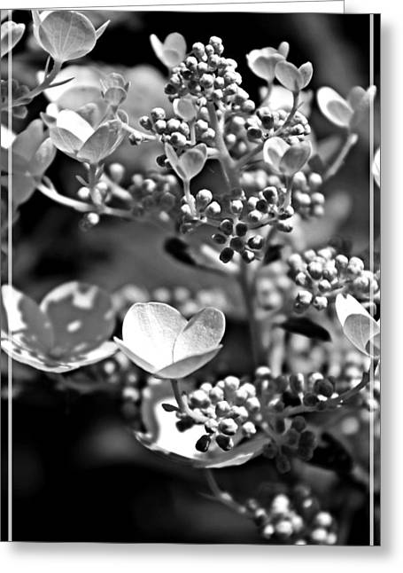 Blooms And Berries In Black And White Greeting Card