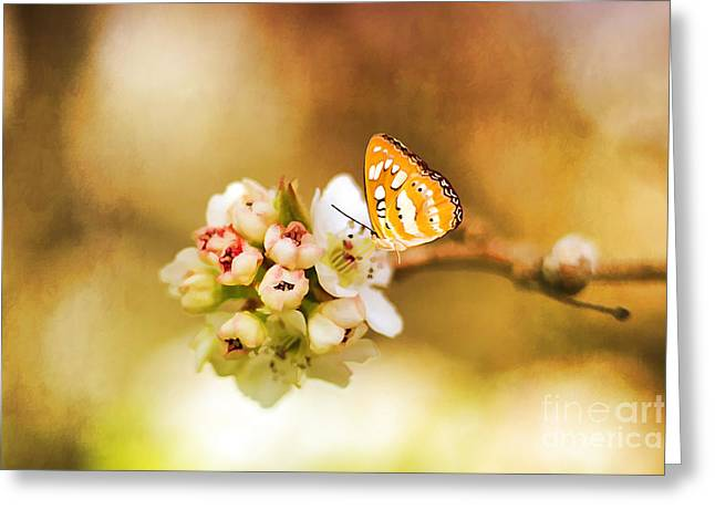 Blooms And Butterflies Greeting Card by Darren Fisher