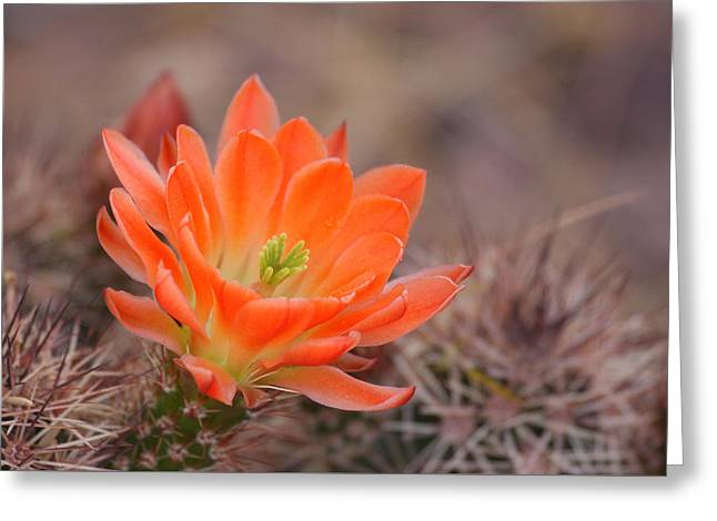 Greeting Card featuring the photograph Blooms In Orange by Ruth Jolly