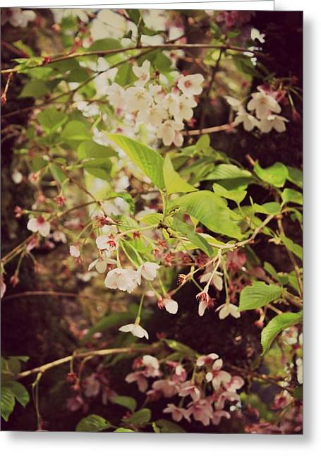 Blooms In The Branches Greeting Card by Cathie Tyler