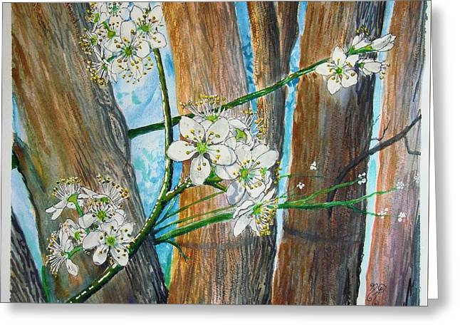 Blooms Of The Cleaveland Pear Greeting Card