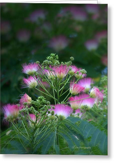 Blooms Of The Mimosa Tree Greeting Card