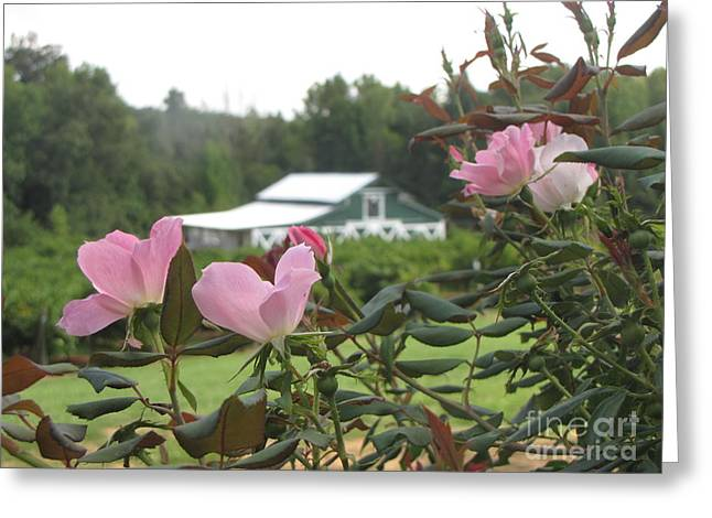 Blooms With The Barn Greeting Card by Gayle Melges