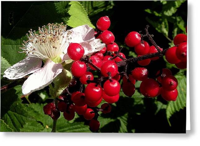 Blossom And Berries Greeting Card