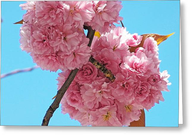 Blossom Bouquet Greeting Card