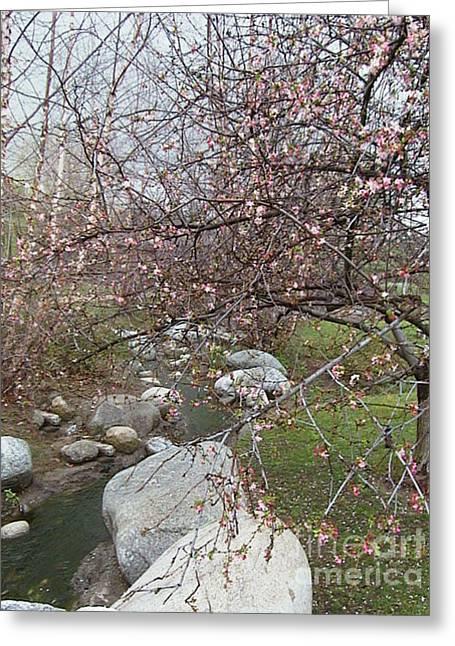 Blossom Brook Greeting Card