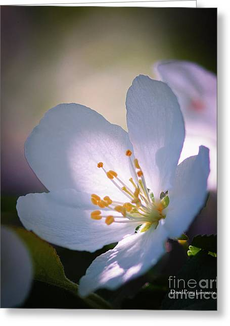 Blossom In The Sun Greeting Card