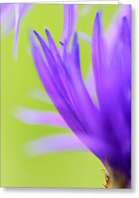 Blossom Macro Greeting Card by Kim Thompson