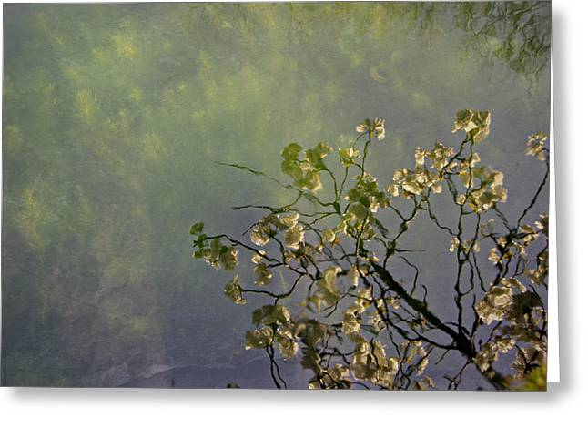 Greeting Card featuring the photograph Blossom Reflection by Marilyn Wilson