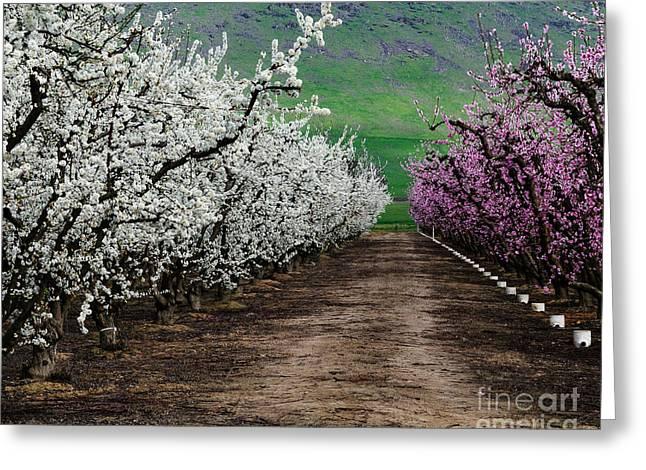 Blossom Standoff Greeting Card