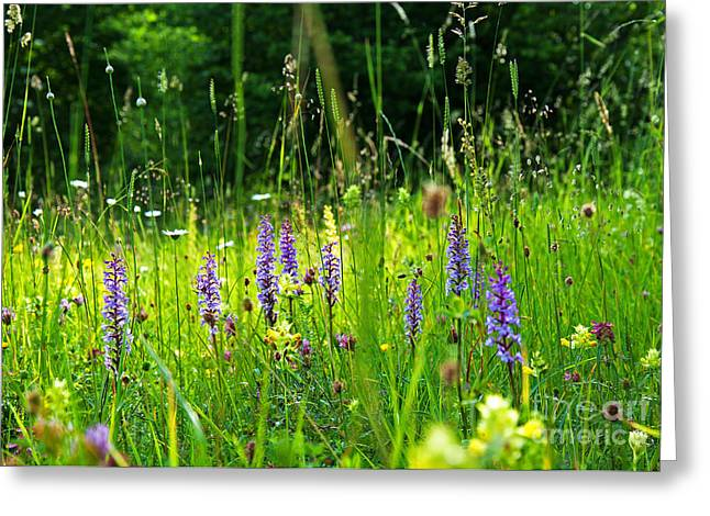 Greeting Card featuring the photograph Blossom Summer Meadow by Kennerth and Birgitta Kullman