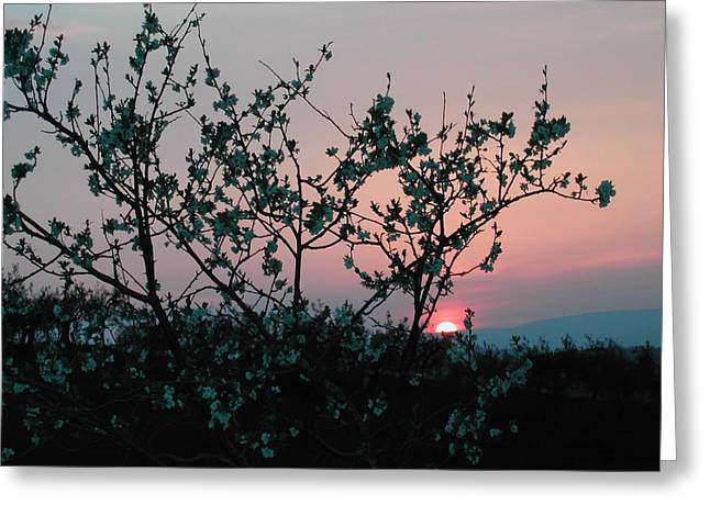 Blossom Sunset Greeting Card by Dorothy Berry-Lound