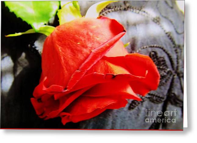 Greeting Card featuring the photograph Blossoming Red by Robyn King