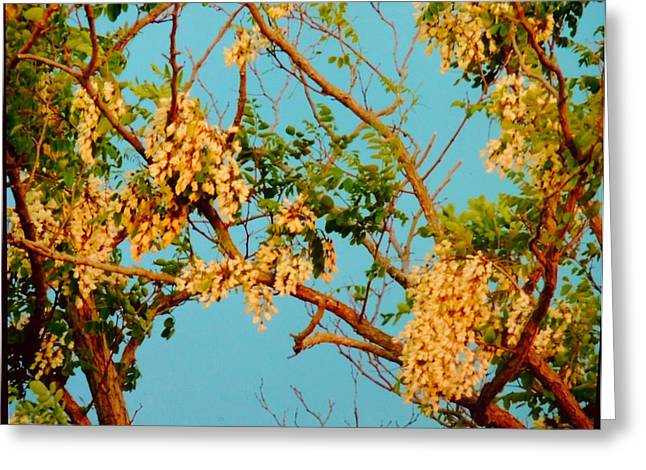 Blossoms 1 Greeting Card by Stephanie Kendall