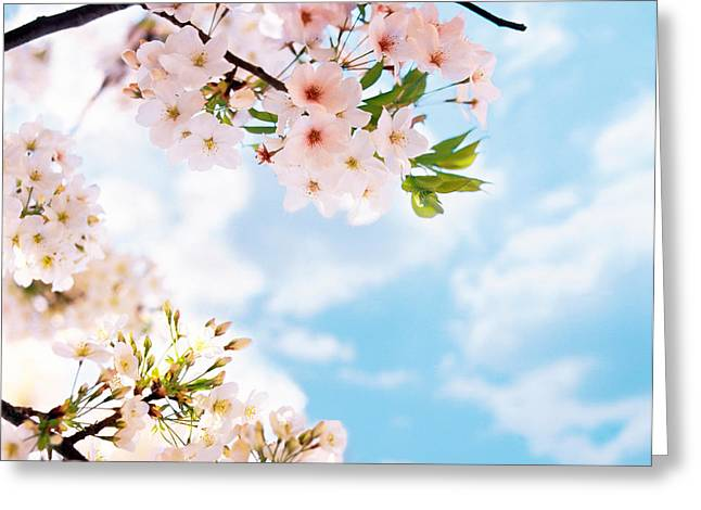 Blossoms Against Sky, Selective Focus Greeting Card by Panoramic Images