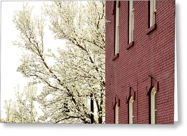 Greeting Card featuring the photograph Blossoms And Brick by Courtney Webster