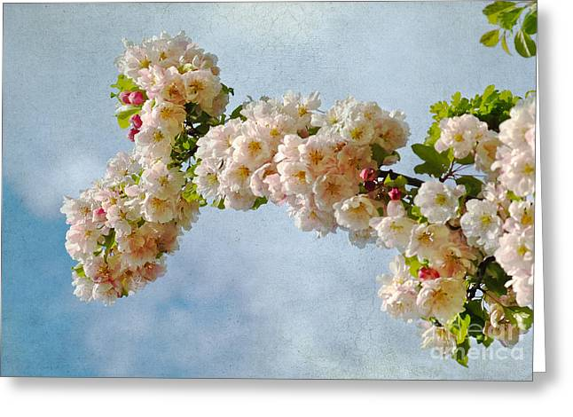Blossoms And Clouds Greeting Card