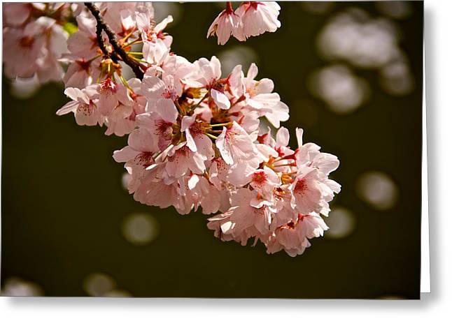 Blossoms And Petals Greeting Card by Kathi Isserman