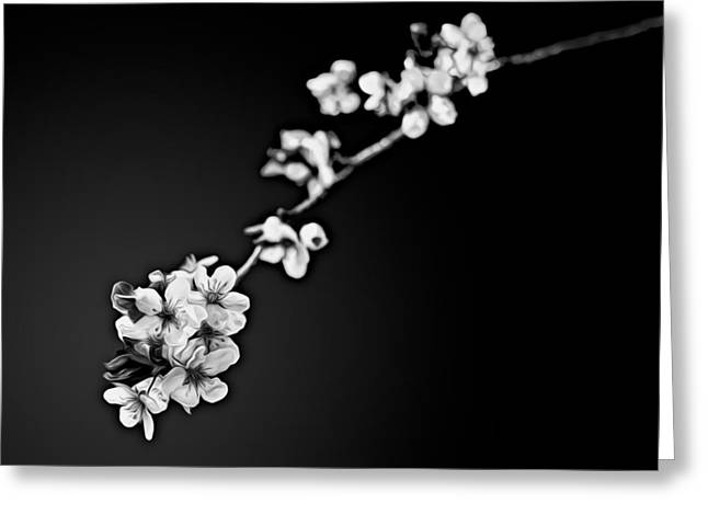 Greeting Card featuring the photograph Blossoms In Black And White by Joshua Minso