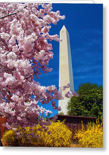 Blossoms Greeting Card by Mitch Cat