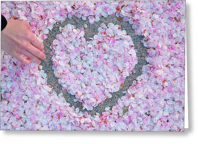 Blossoms Of Love - Cherry Blossoms 2013 - 071 Greeting Card